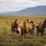 islanda_2014_bis_www.giuseppespitaleri.com_301