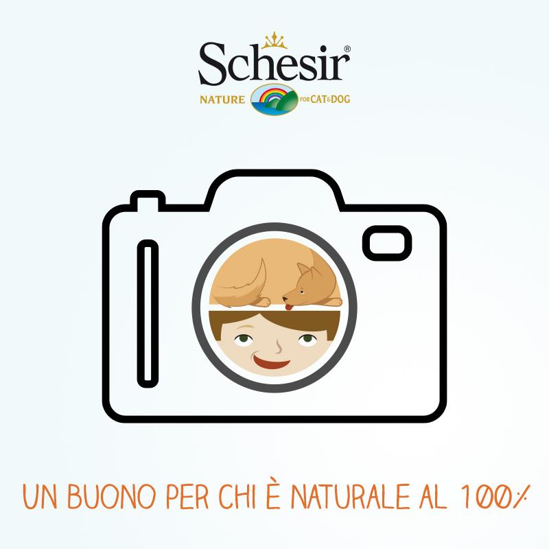 concorso_schesir_cane