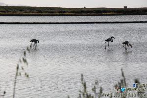 Foto/Photos/фото – Saline di Nubia (Trapani – Sicilia/Sicily) – Italia/Italy 2016