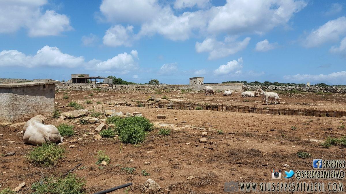 isola_favignana_trapani_www.giuseppespitaleri.com_034