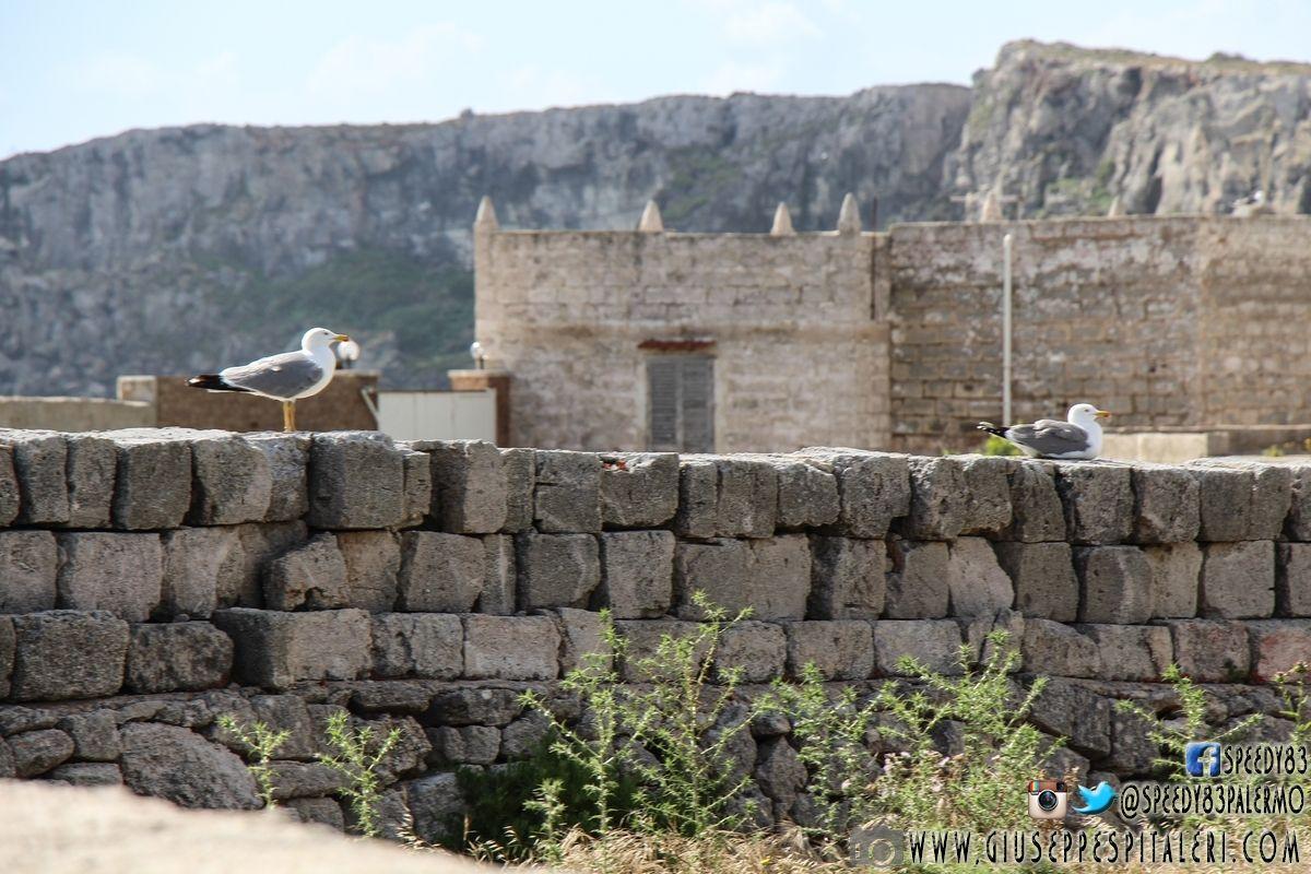 isola_favignana_trapani_www.giuseppespitaleri.com_130