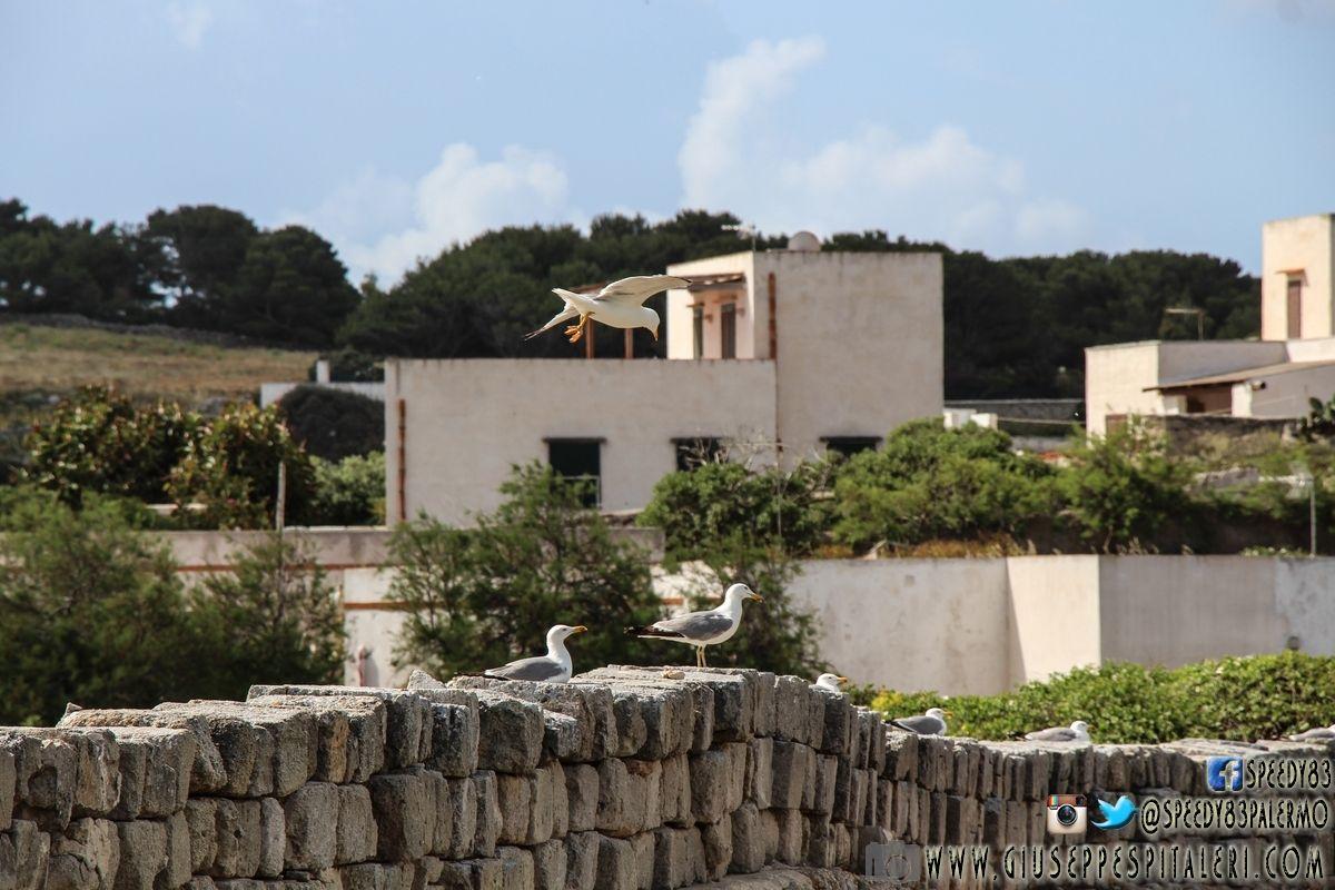 isola_favignana_trapani_www.giuseppespitaleri.com_132
