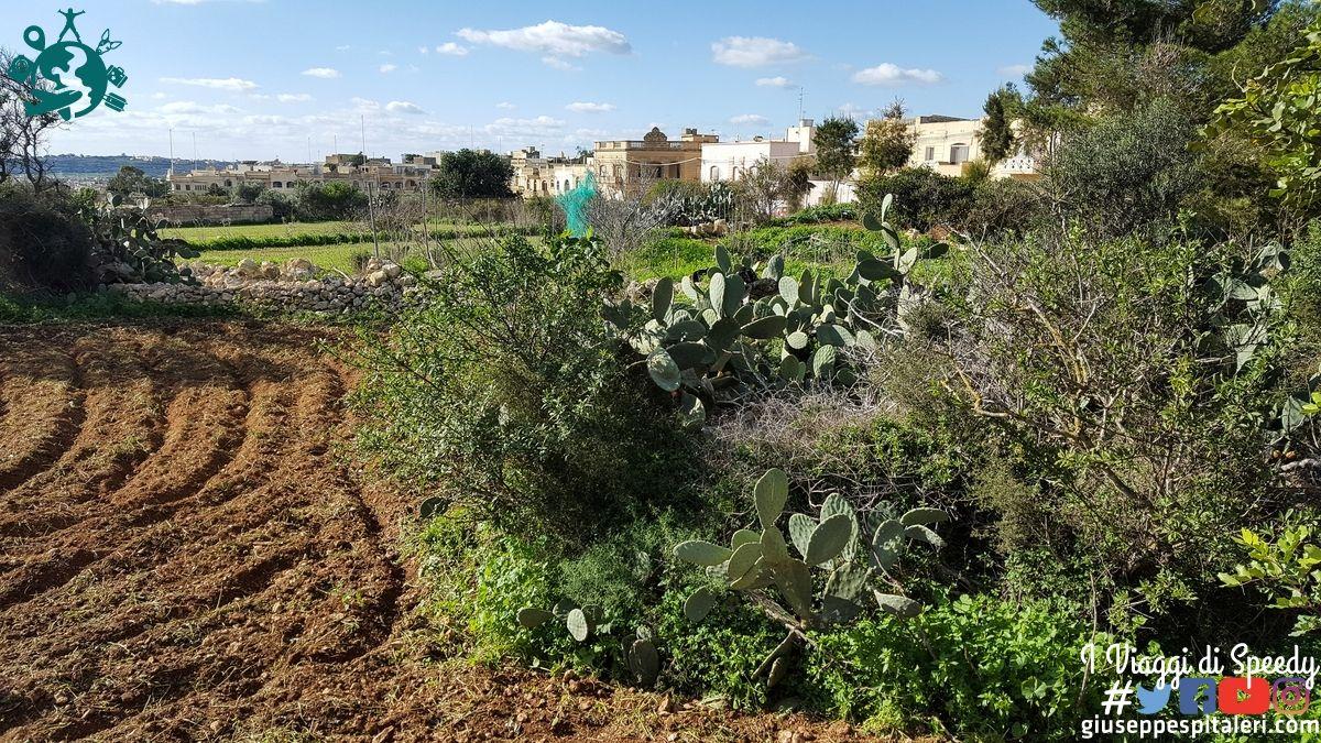 isola_gozo_malta_2016_www-giuseppespitaleri-com_039