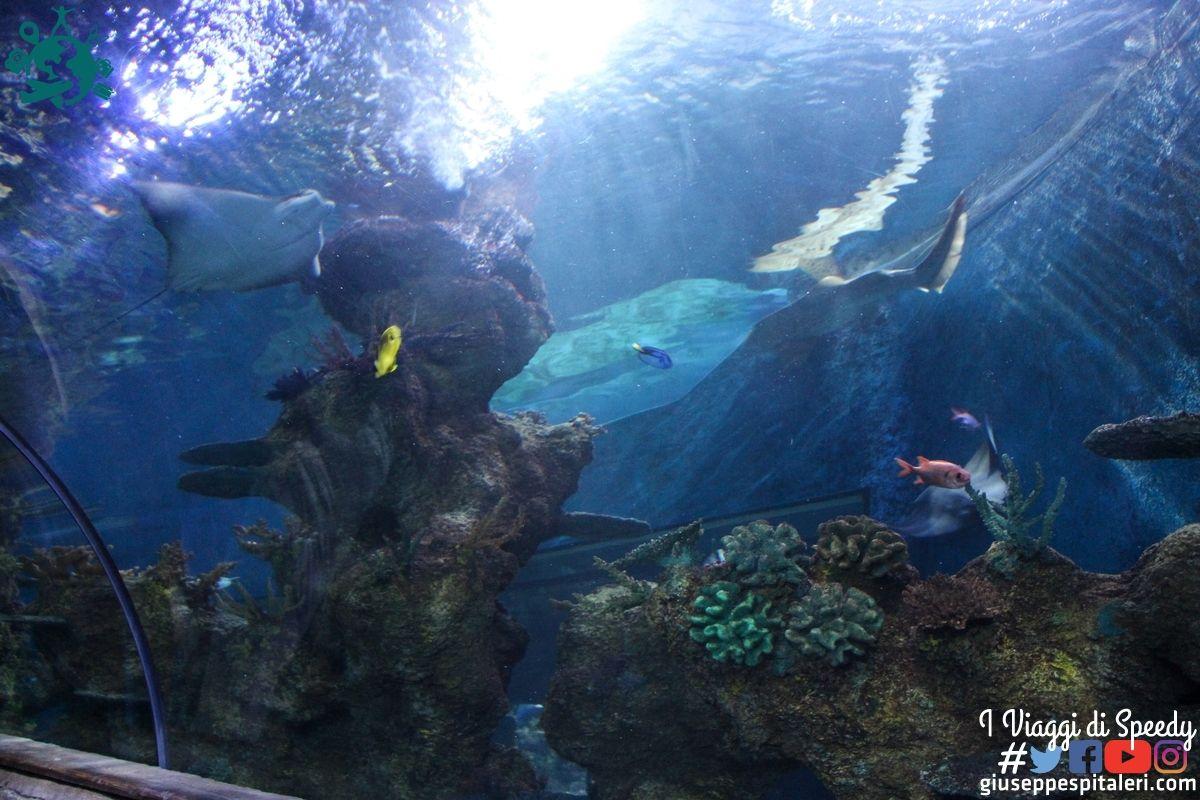 isola_malta_2016_www-giuseppespitaleri-com_092