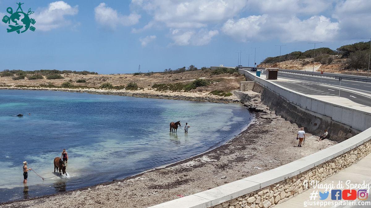 malta_2016_moby_www-giuseppespitaleri-com_088