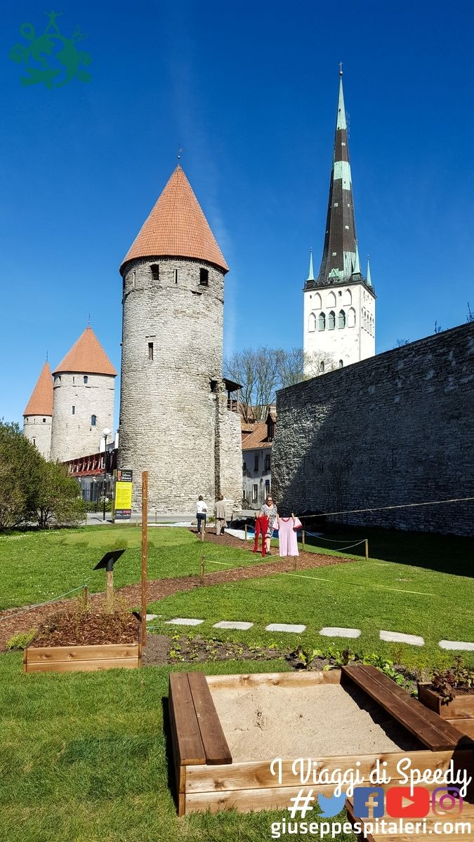 tallinn_estonia_www.giuseppespitaleri.com_162