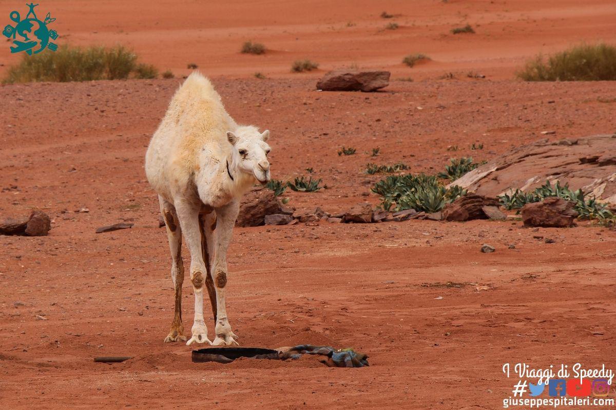 giordania_wadi_rum_www.giuseppespitaleri.com_114