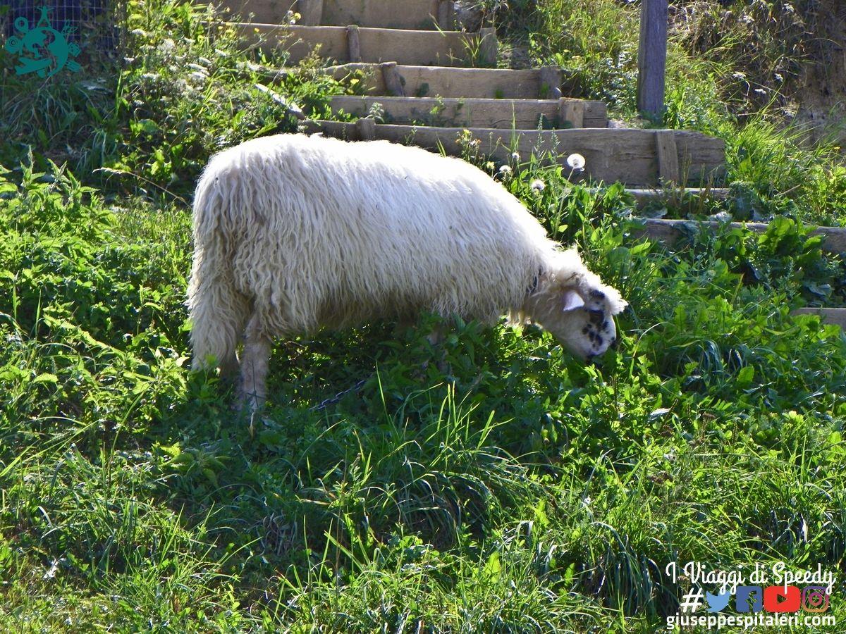 visoko_bosnia_2011_bis_www.giuseppespitaleri.com_015